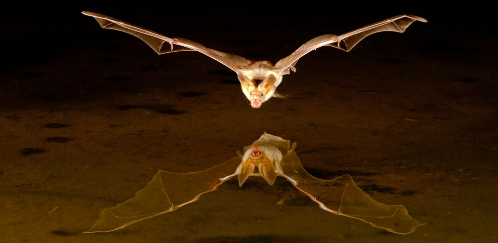 Law of Attraction and Bat Meaning