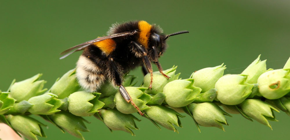 Meaning of Bees in Dreams