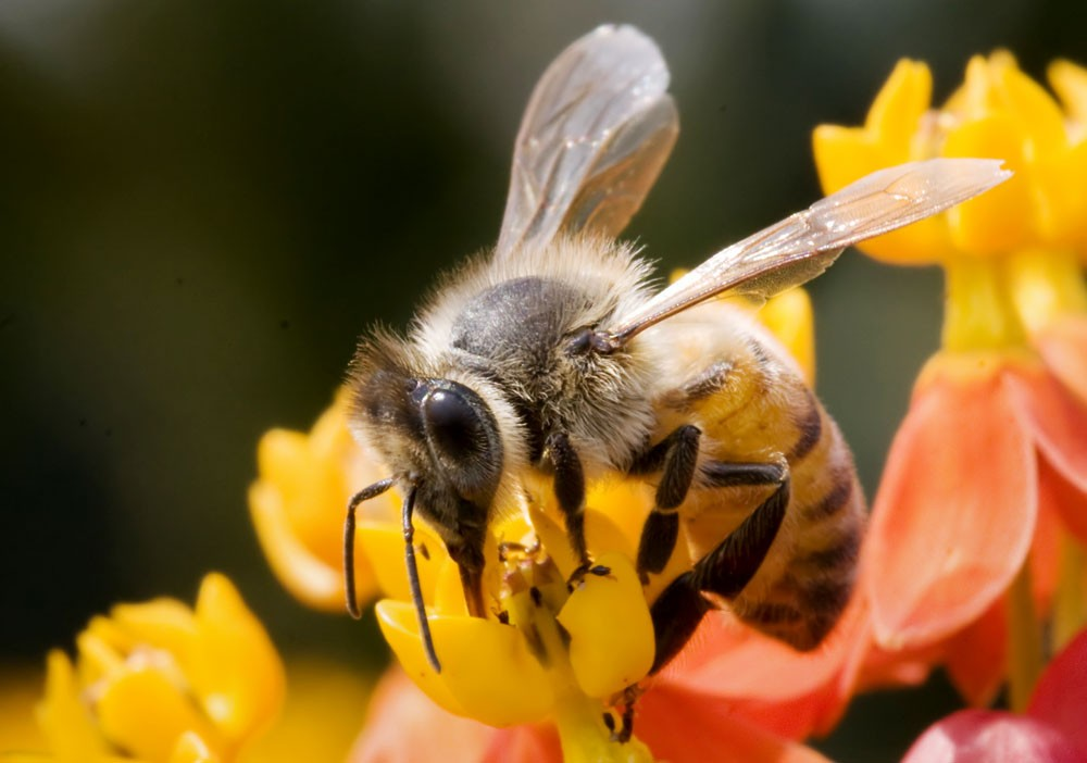 Symbolic Meaning Of Bees In Dreams On Whats Your Sign