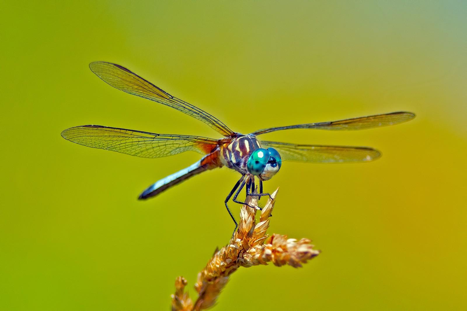 Animal Symbolism Dragonfly