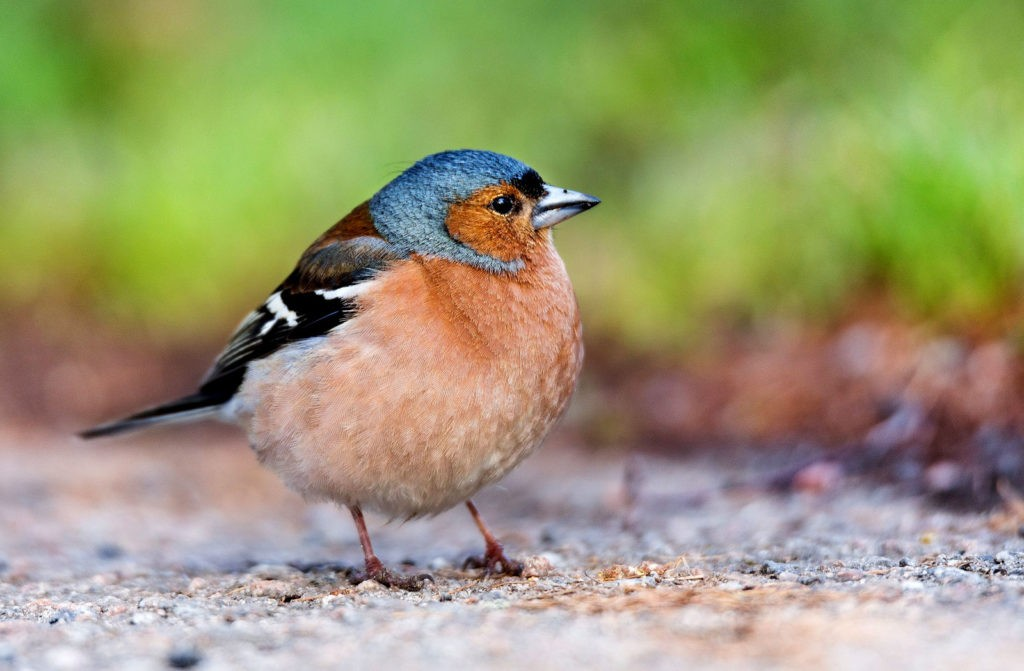 symbolic finch meanings