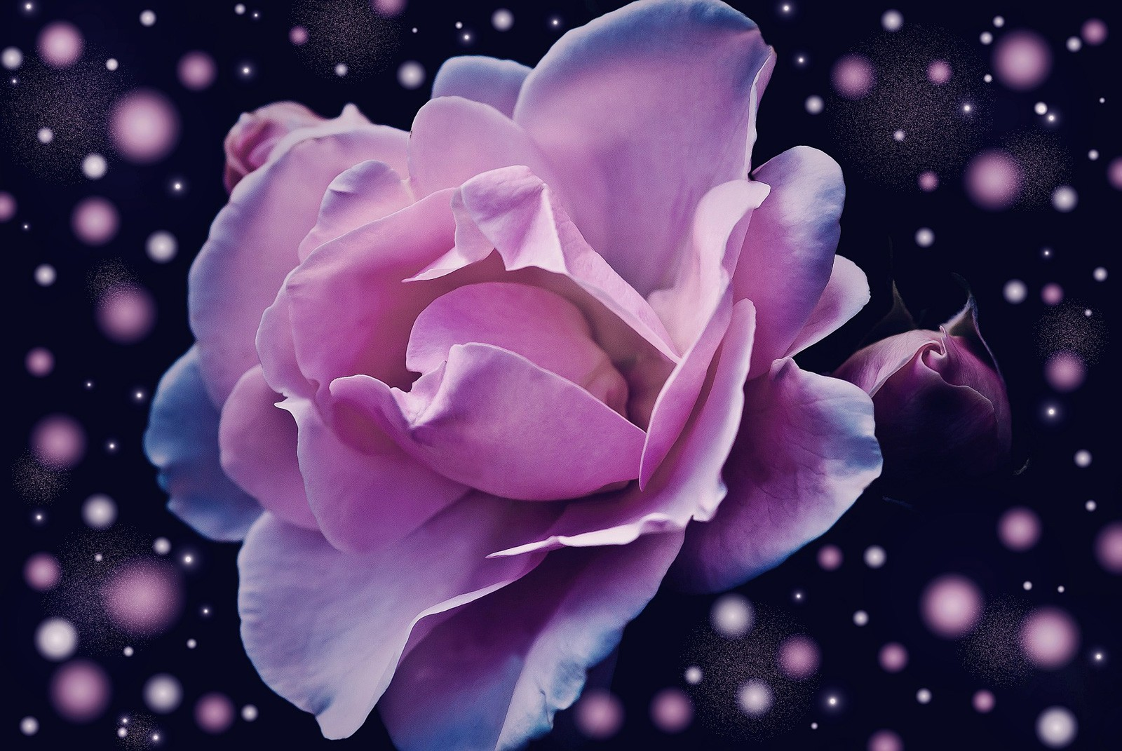 Flower Meanings In Dreams Interpreting Flower Dreams Whats Your Sign