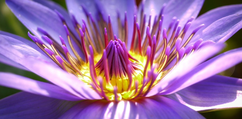 flower meanings and symbolism of flowers