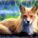 Fox tattoo ideas and fox meanings