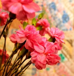 January meaning and flower meanings of carnation for this month