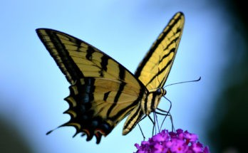 law of attraction butterfly meaning