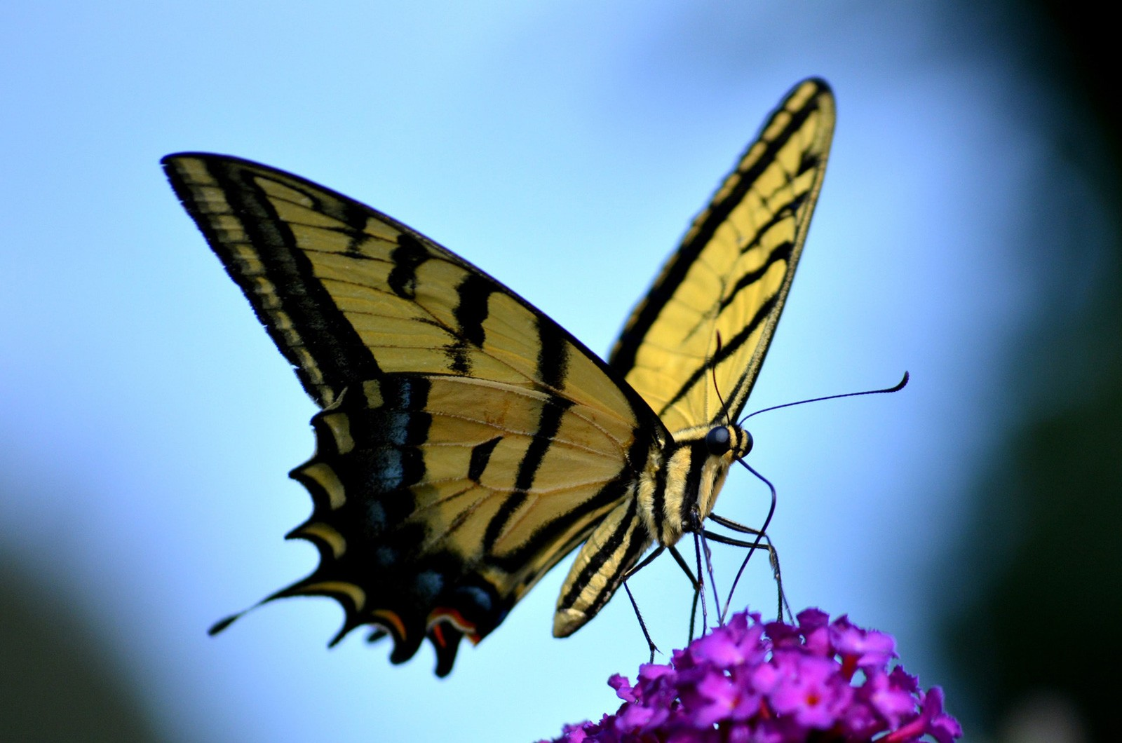 Law of Attraction and Butterfly Meaning