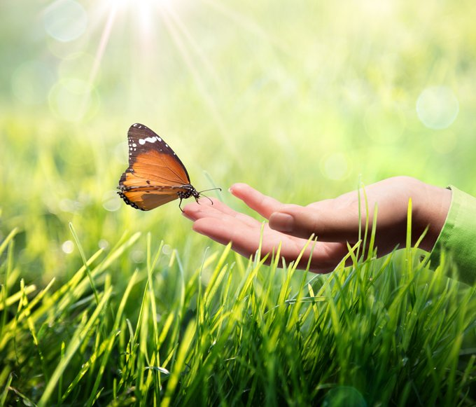 law of attraction and butterfly meanings