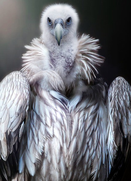 law of attraction and vulture meaning