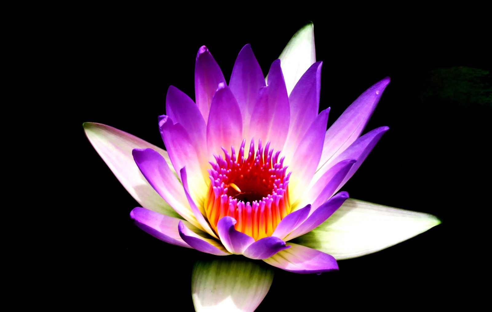 Lotus flower meanings and lotus symbolism on whats your sign lotus tattoo ideas and meanings izmirmasajfo Choice Image