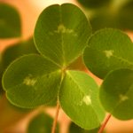 shamrock meaning and month of march meaning