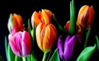 meaning of flower colors
