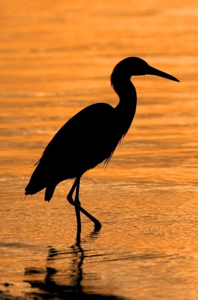 meaning of the heron
