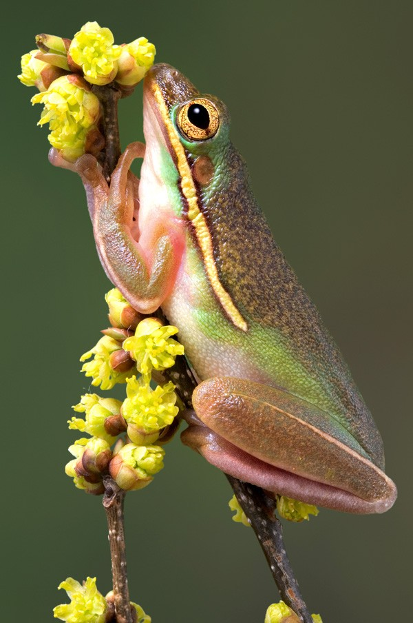 messages from nature and happy frog meaning
