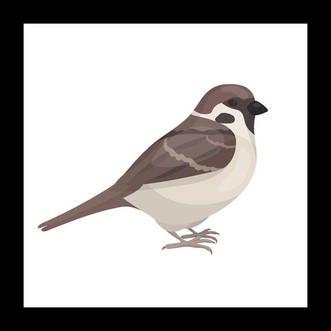 sparrow meaning and mother symbol