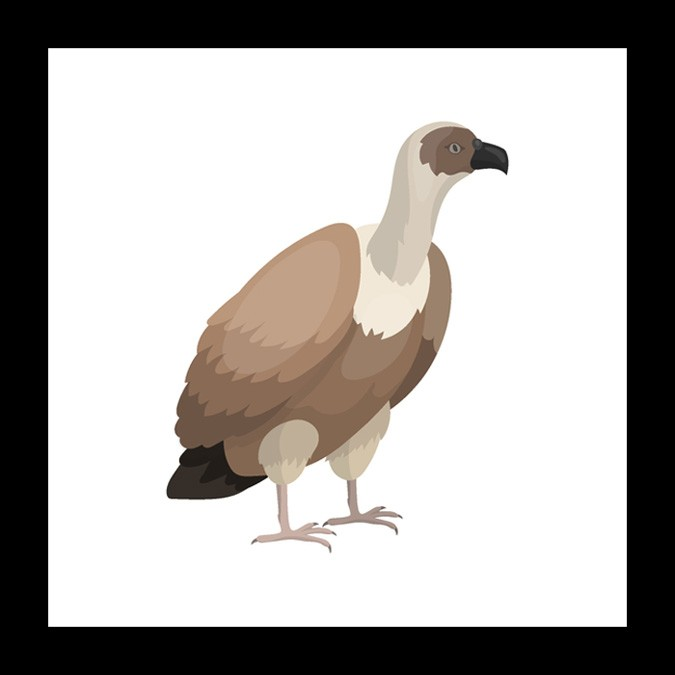 vulture bird meaning and mother symbols