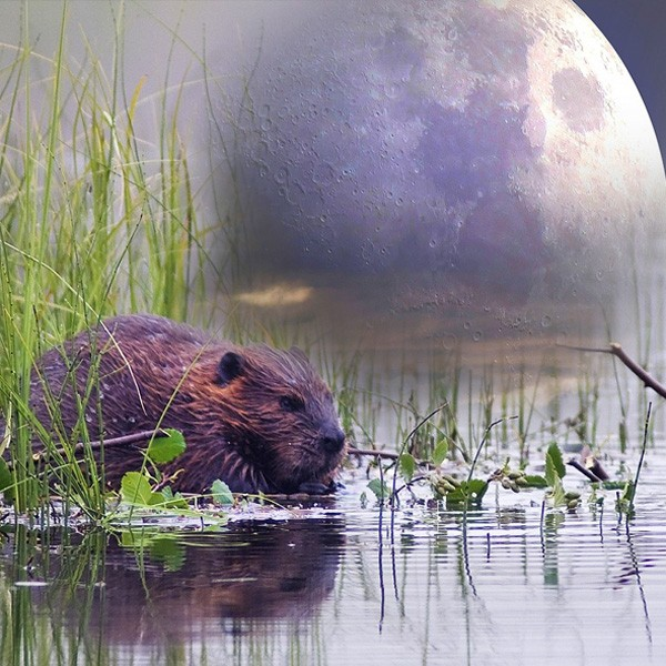 Native American moon sign meanings and beaver moon for November