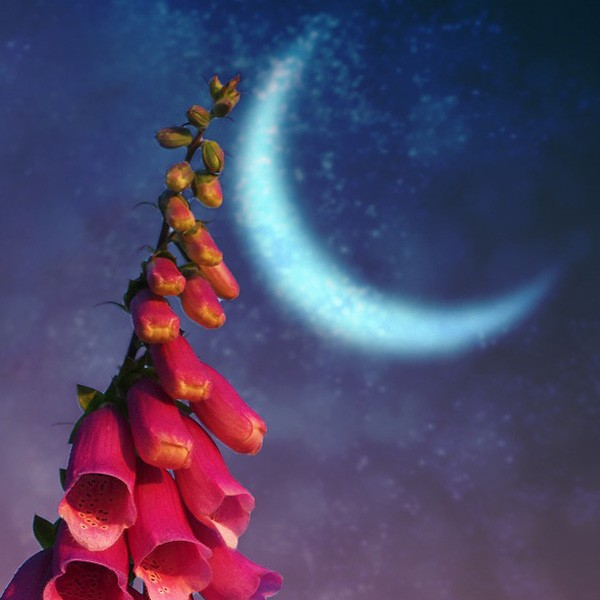 Native American moon sign meaning for May - flower moon meaning