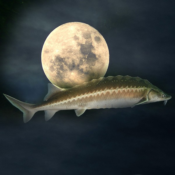 Native American moon signs and meanings of the August sturgeon moon