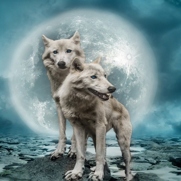 Native American Moon Sign Wolf Meaning