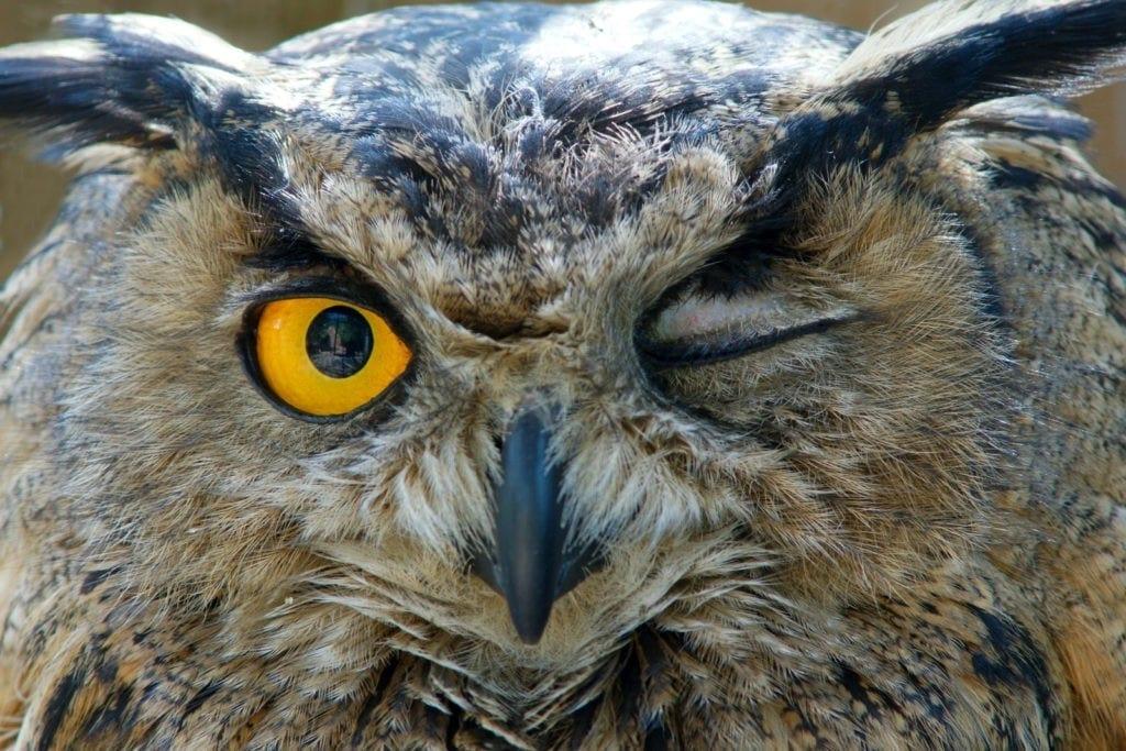 symbolic owl meaning