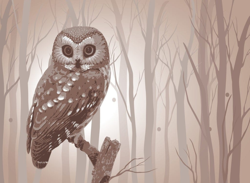 owl tattoo meaning and owl meaning