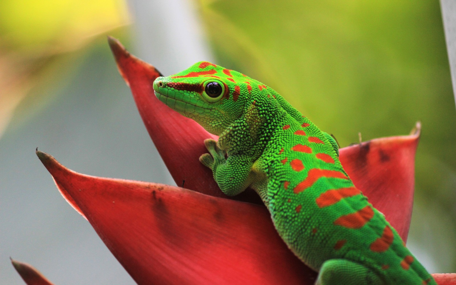 Reptile Animal Totems