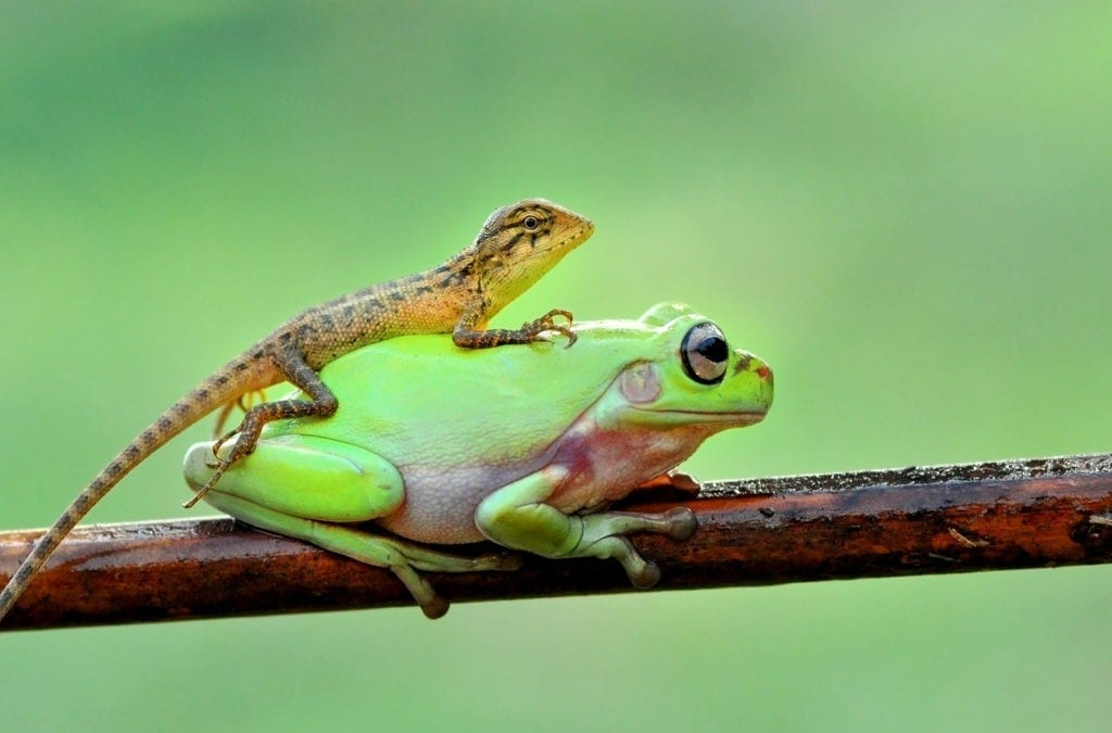 reptile animal totems : amphibian and reptile meanings