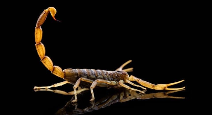 Scorpion tattoo ideas
