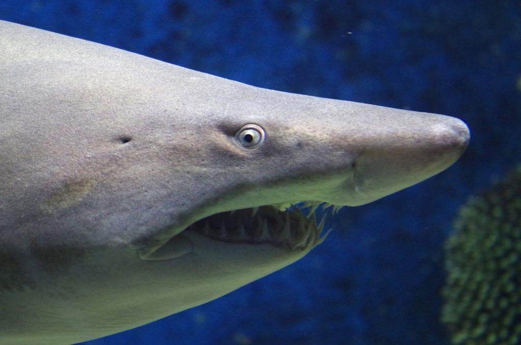 symbolic shark meaning