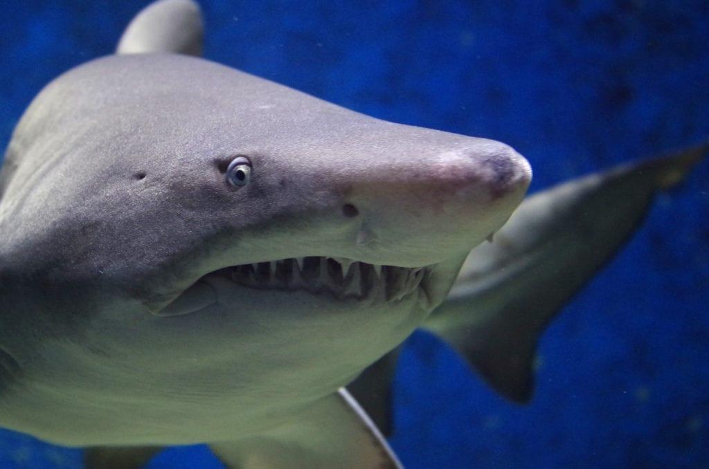 shark tattoo ideas and shark meanings