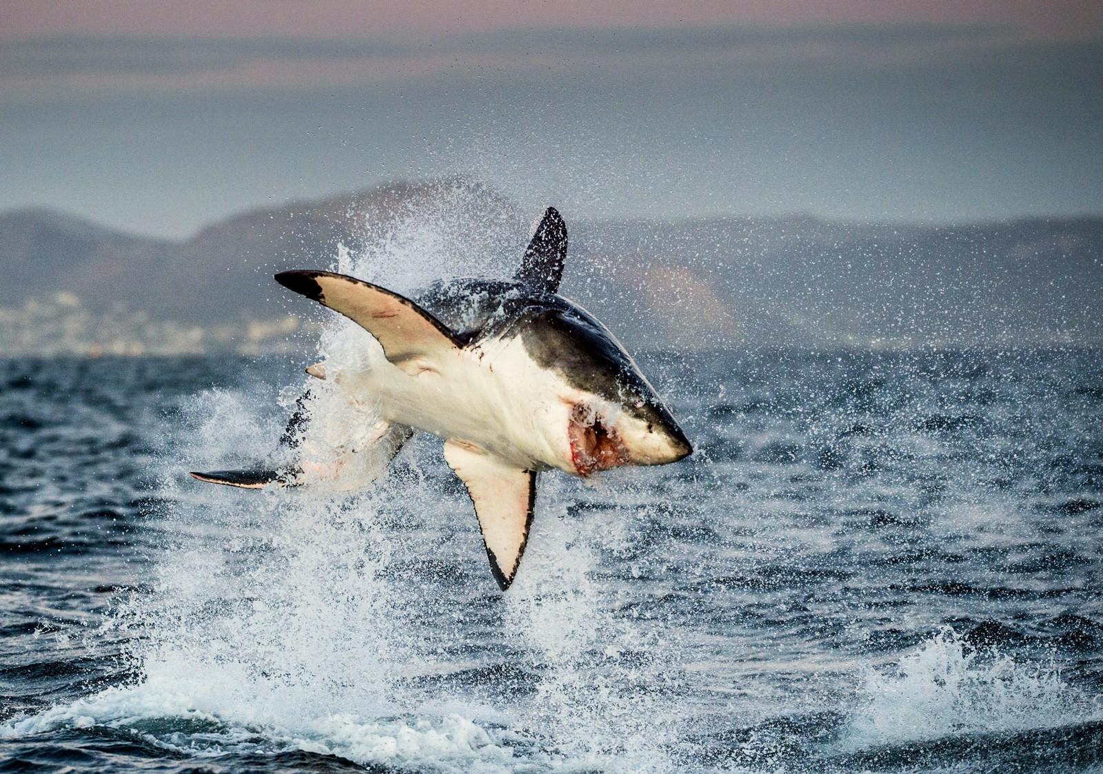 Shark Totem and Symbolism