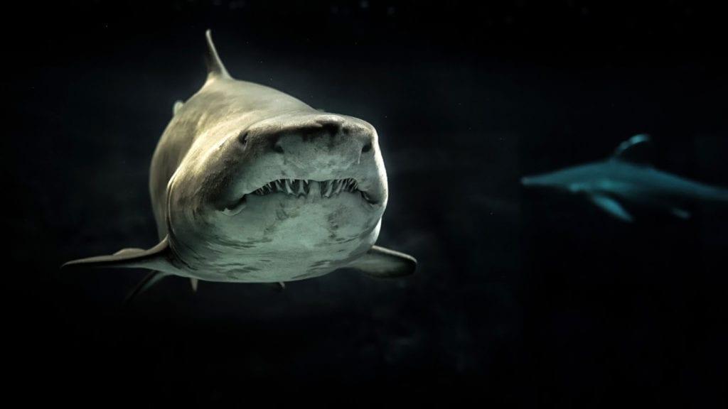 shark totem meanings