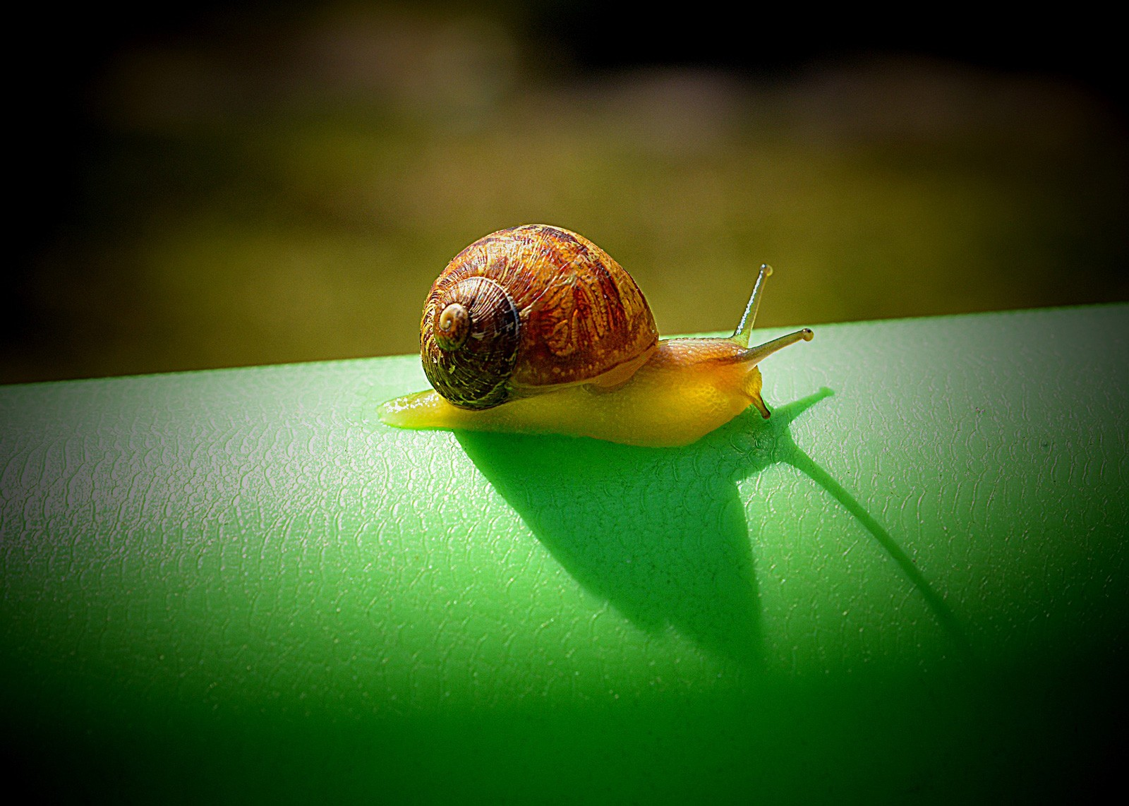 snail tattoo meaning