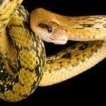Symbolic Snake Meaning