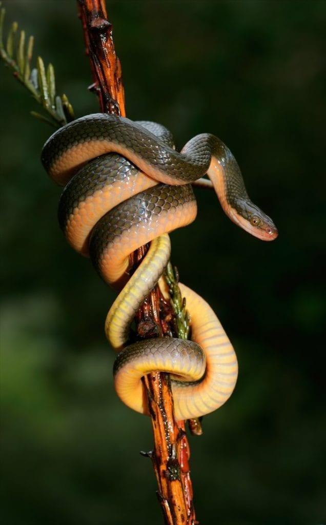 snake symbolic meaning