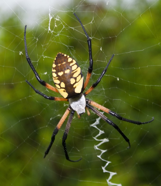 symbolic spider meaning