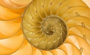 spiral meaning