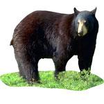 bear solstice symbol