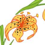 honeysuckly symbol meaning