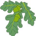 oak solstice symbol meaning