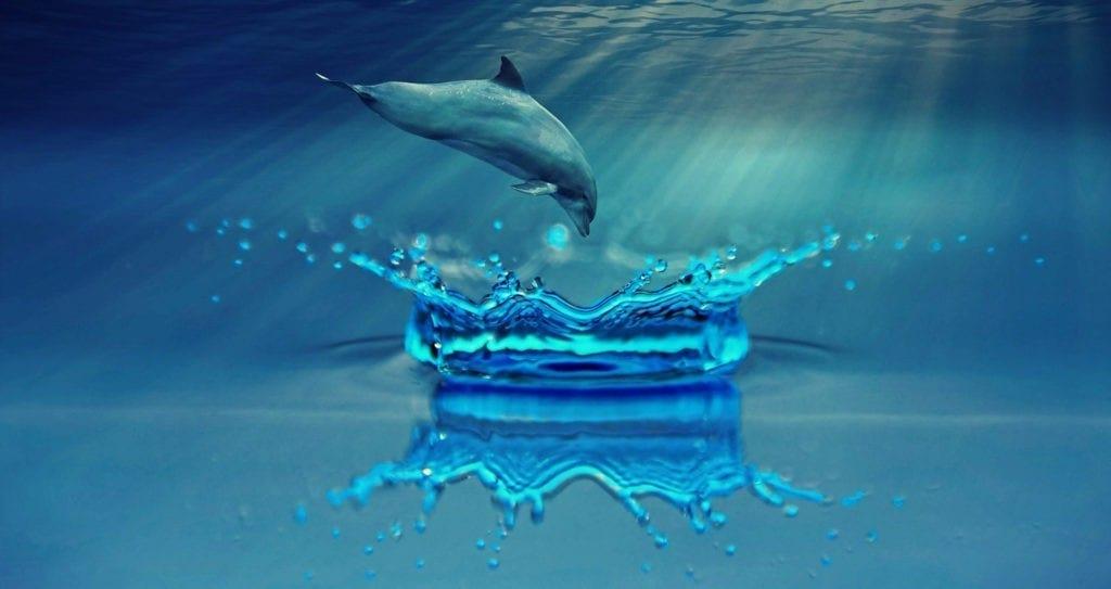 water animal totem meaning