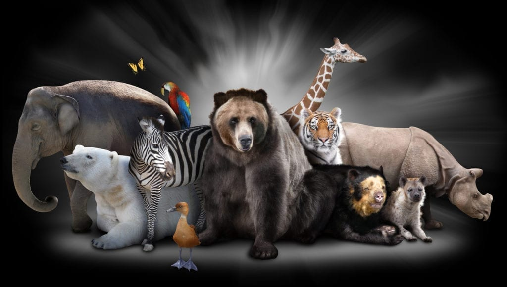 Animal Totem meanings