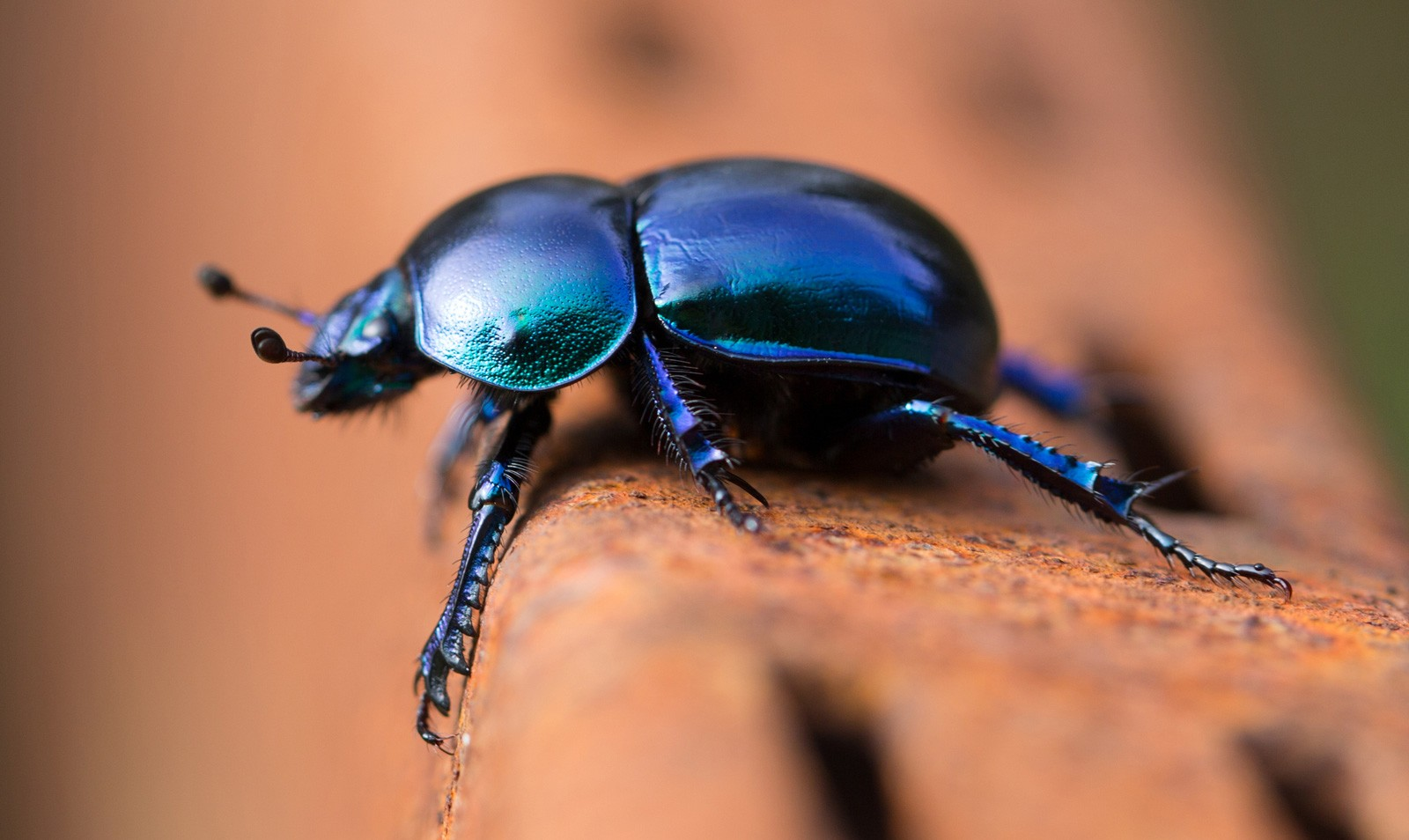 Digging Into Symbolic Beetle Meaning On Whats Your Sign