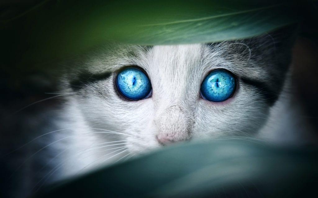 Cat Animal Symbolism