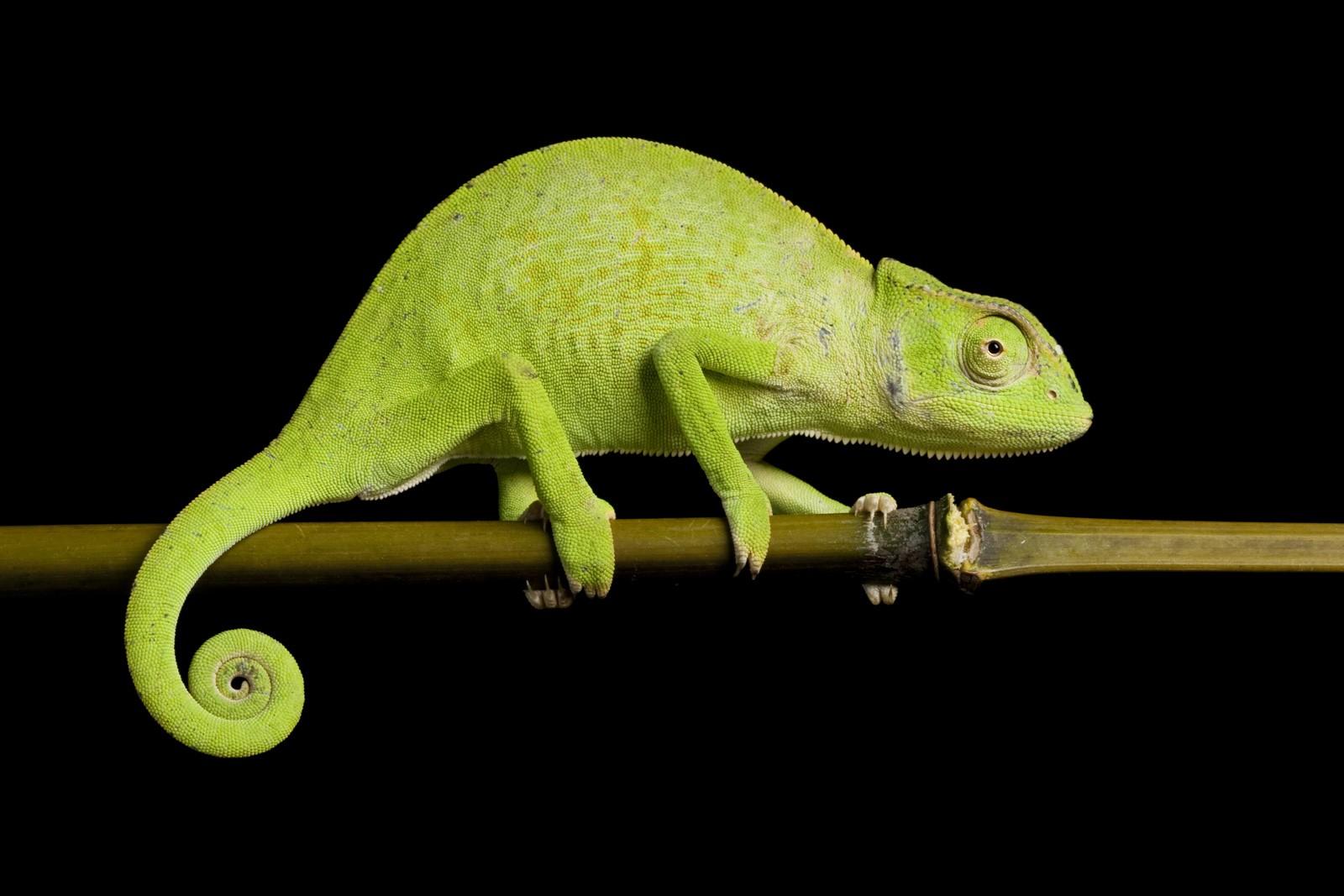 Symbolic Chameleon Meanings