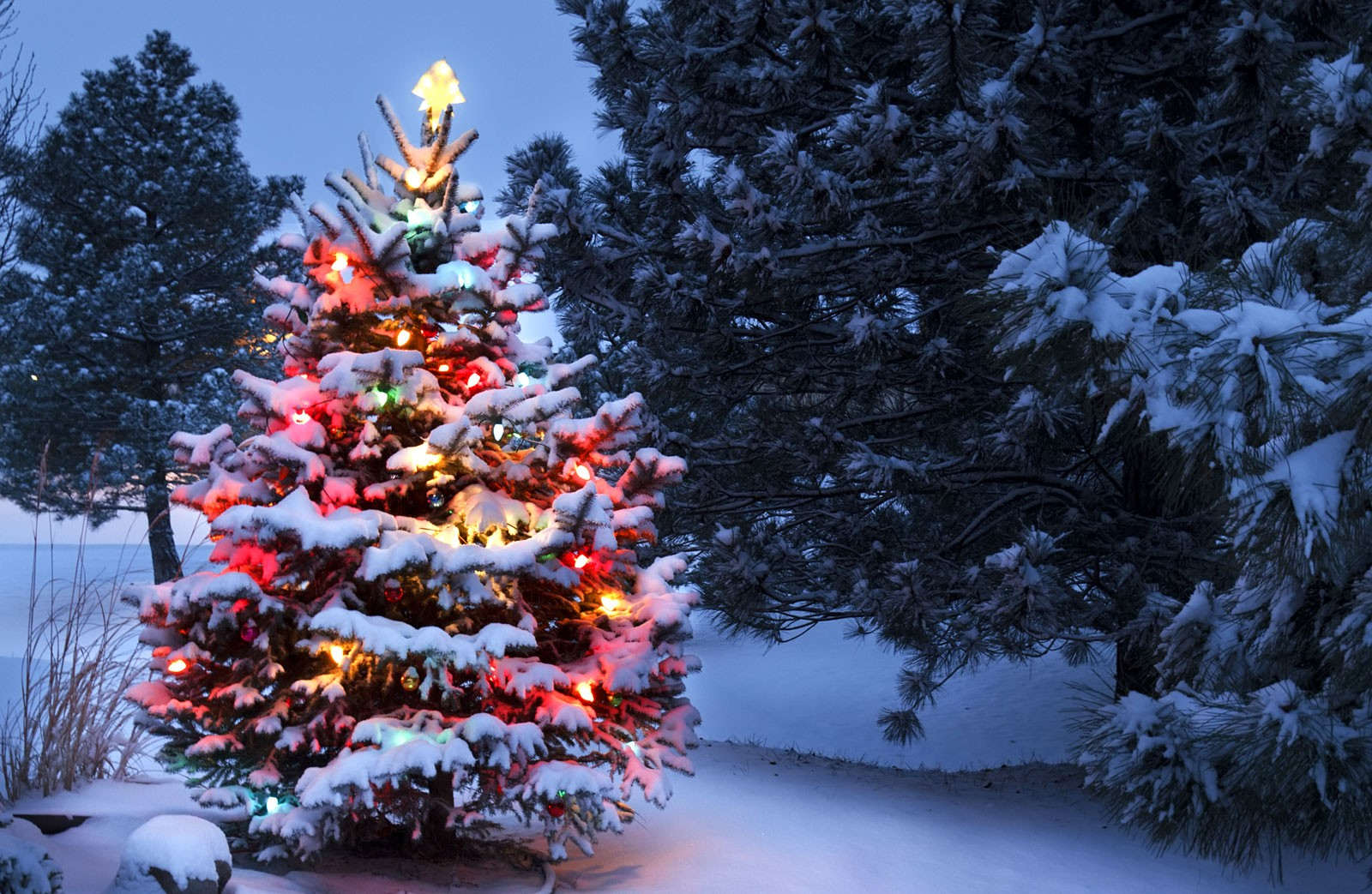 Symbolic Meaning of the Christmas Tree on Whats-Your-Sign