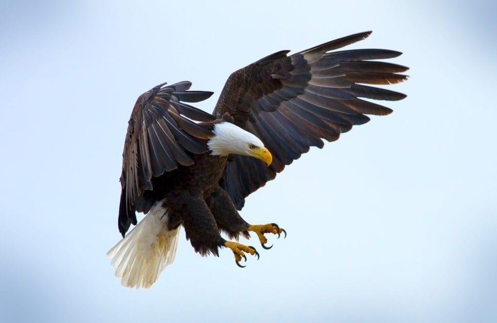 Symbolic eagle meaning