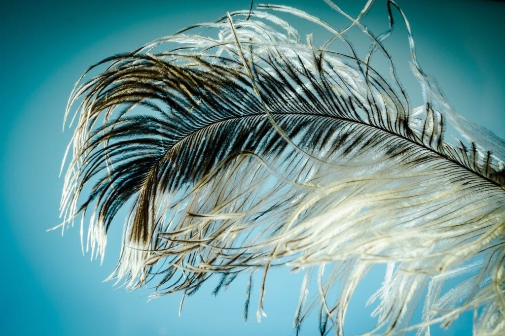 symbolic meaning of feathers