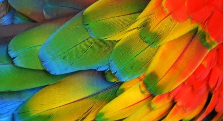 symbolic feather meanings